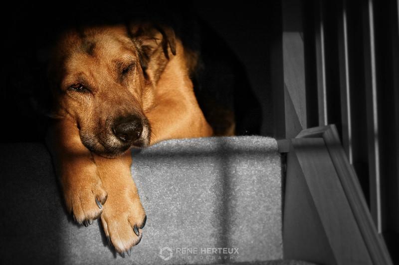 Lazy dog morning