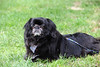 Bear, of Roger & Lucinda Hodges