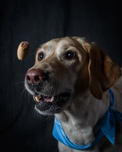 SnackDogs-Paisley-032