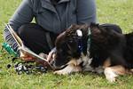 Reading with Sebastian (crop #2)<br /> (2066-iiii)