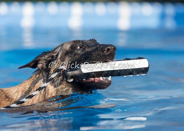 Pool Rental - Friday, April 17, 2015 - Frame: 3986
