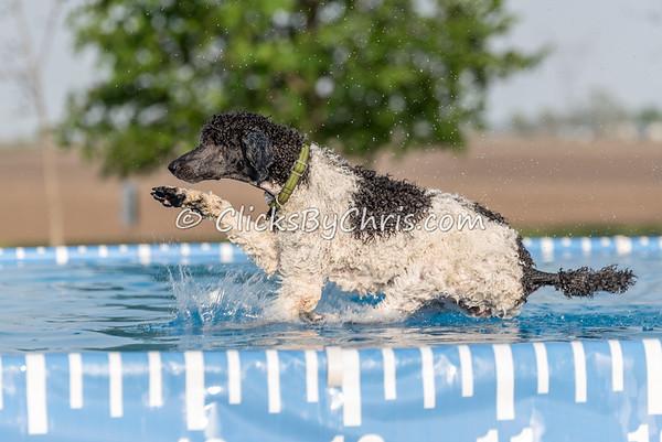 Pool Rental - Wednesday, May 6, 2015 - Frame: 6482