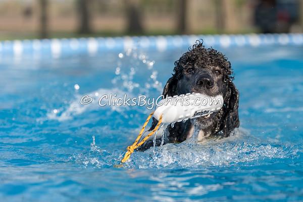 Pool Rental - Wednesday, May 6, 2015 - Frame: 6472