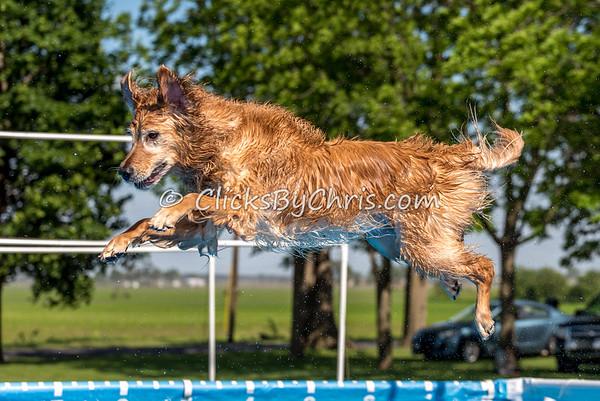 Pool Rental - Southtown K9 - Saturday, May 28, 2016