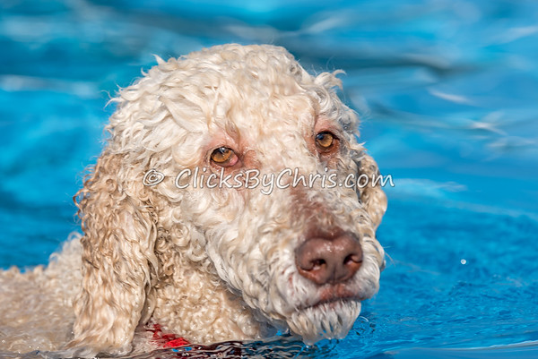 Pool Rental - Southtown K9 - Monday, Sept. 12, 2016