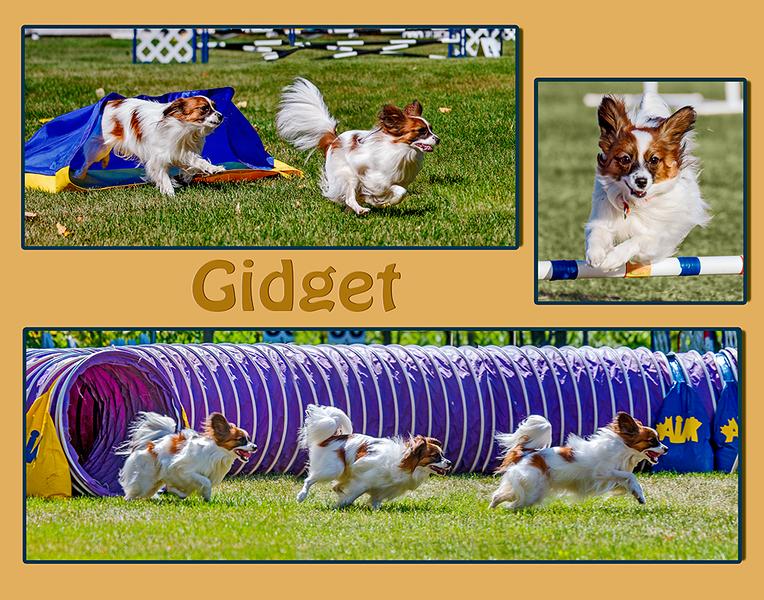 gidgetH