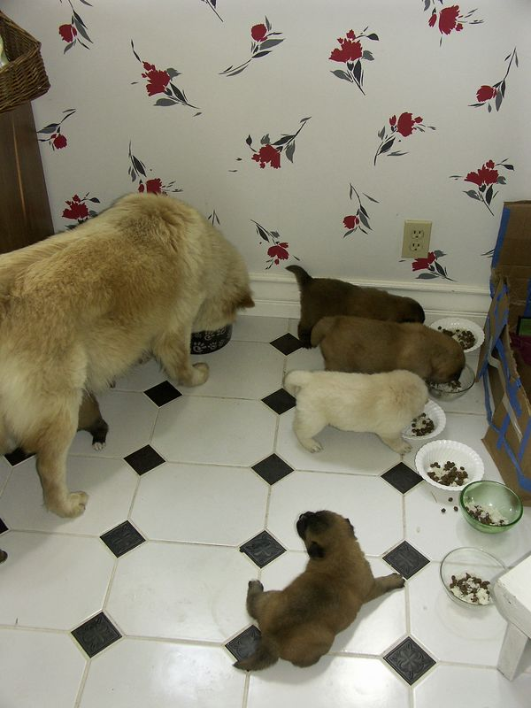 Puppies, May 2005