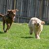 Chloe and Rocky