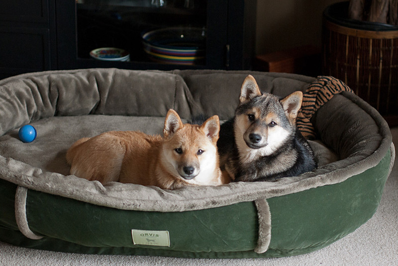 A bed for two
