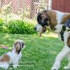 Tootsie and Samson Meet