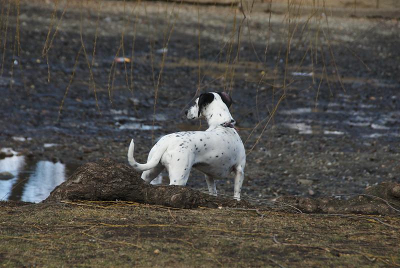 PMC_79212012-02-25-solie-sunday-dog- © 2011 Penny Cherubino