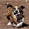 Jan. 09, 2013...Chestnut Dog Park...2200 East Lake Road South, Palm Harbor, FL 34685