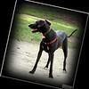 oct 23, 2012  enterprise dog park        _img_9048pfs (1)