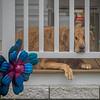 2019-02-03_neighbor's dog_P2030013