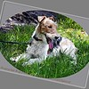 """Jack""..Enterprise Dog Park..July 26,2012...© PhotosRUs2008"