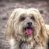 2017-11-08_dog_enterpriseDP_jpeg_3001 4_--087650_Tony's Warm Summer Day_FSlevels