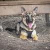 Mr Ryan at Chestnut dog park-Tarpon Springs,Fl --2011-1067