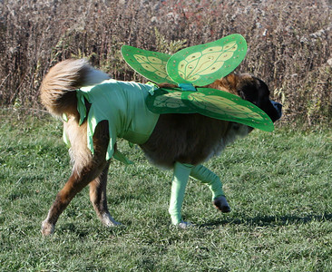 Tinkerbell trots off. . .