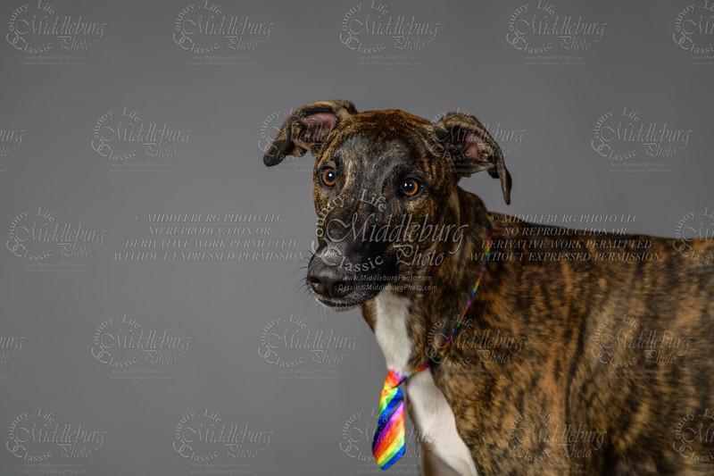 Lisa T Puppies0687
