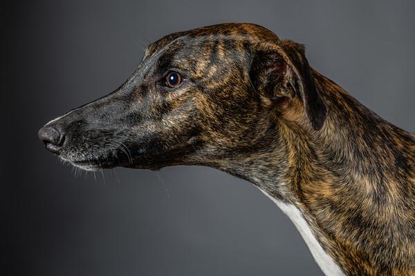 Lisa T Puppies0588