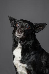 Lisa T Puppies0570