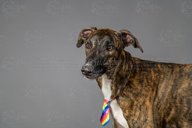 Lisa T Puppies0686