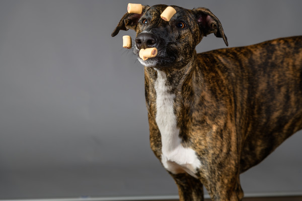 Lisa T Puppies0660