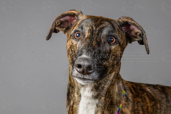 Lisa T Puppies0681