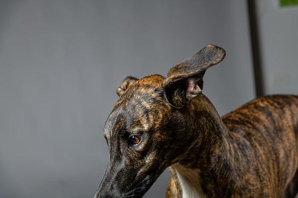 Lisa T Puppies0623