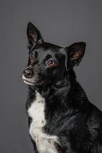 Lisa T Puppies0571