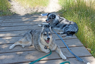 Dogs rest in the shade on a bridge over a tiny creek while Human Mom does other silly stuff.