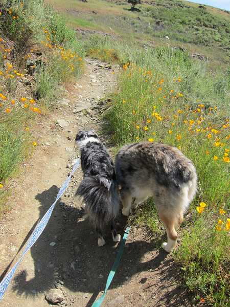 How I see Boost and Tika during most of most hikes.
