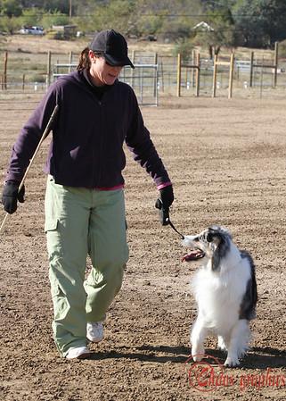 Tri-County Aussies Herding Trial - Sheep