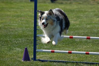 Sadie jumps