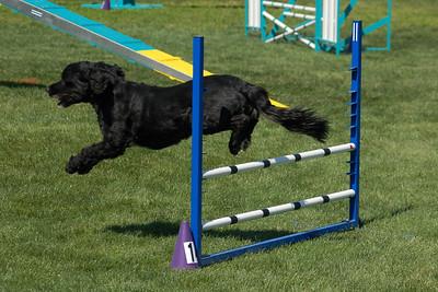 Ouzo jumps