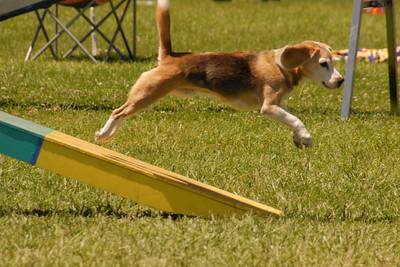 Bernie flies off the teeter