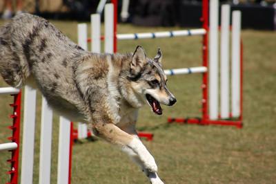 Tika jumps