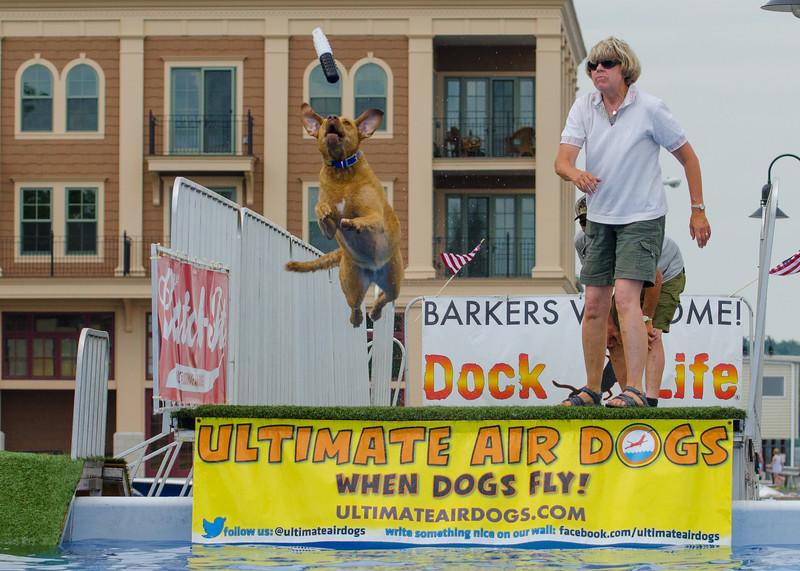 Ulitmate Air Dogs