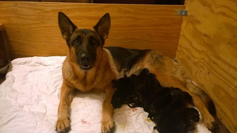 01/31/2015 newborn pups