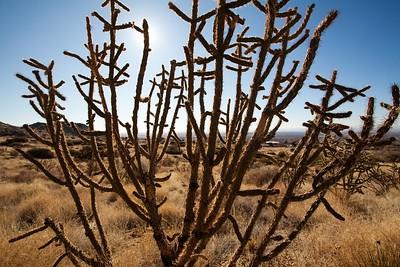 Cactus.0032
