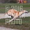 greyhound_D6T2802