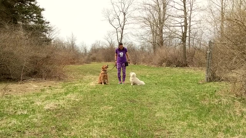 Fun with Recall and Walking On Leash