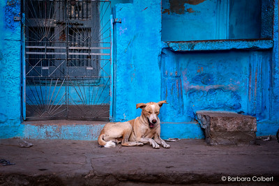 Jodhpur, India | 2012