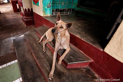 Bago, Myanmar | 2014