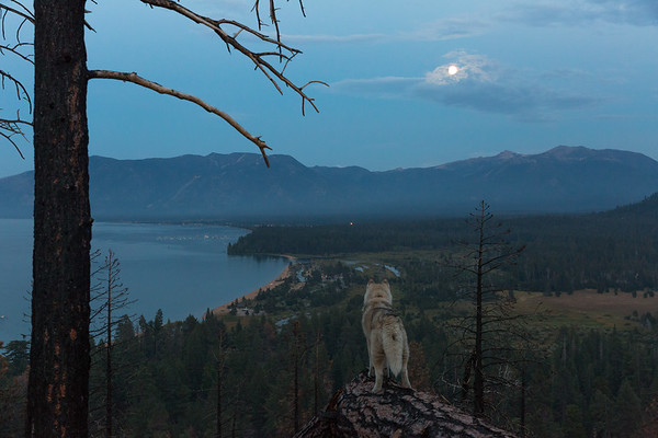 Howling at the Full Moon