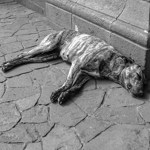 Peru Dog