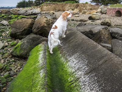 Macy in the Moss