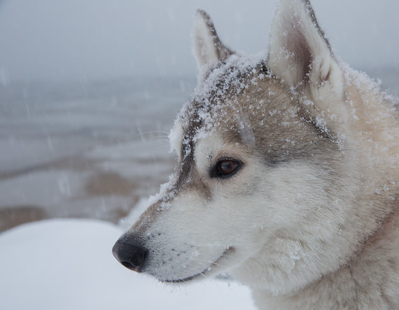 Snowy Portrait