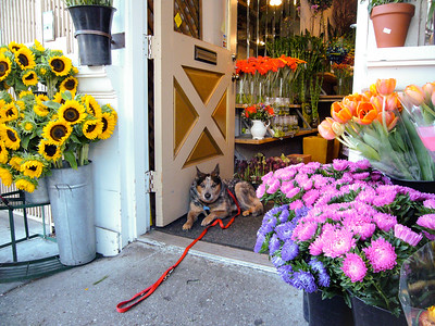 Flower Shop Dog