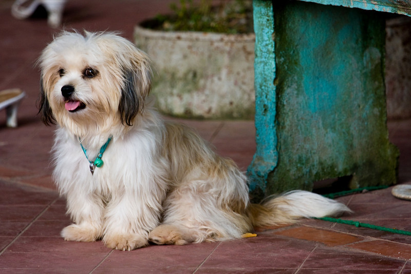 Guard dog?<br /> <br /> Location: Luang Prabang, Laos<br /> <br /> Lens used: 100-400mm f4.5-5.6 IS